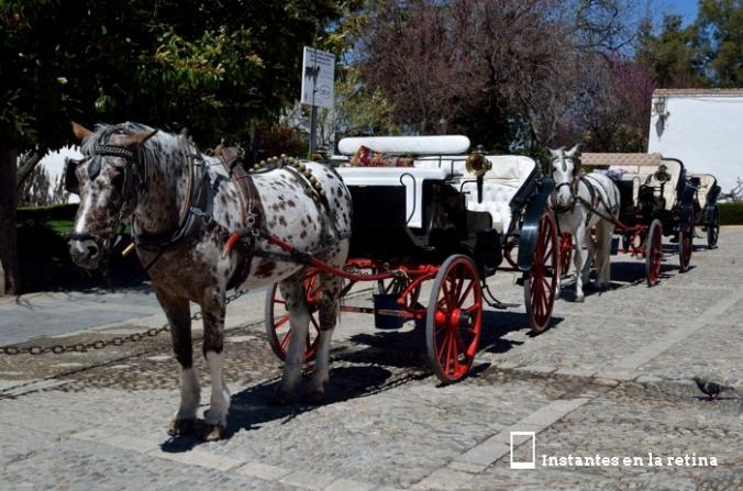 DSC_0911 coches caballos