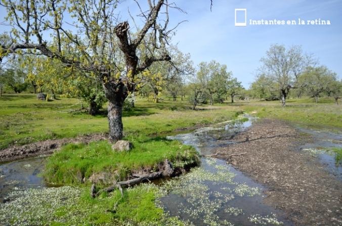 DSC_1068 árbol entre agua