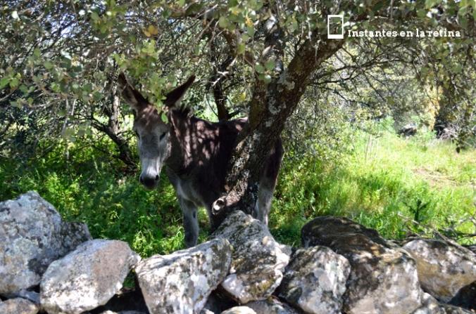 DSC_1158 burro