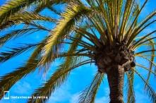Palmera marbellí