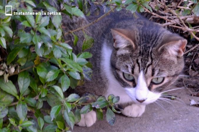 DSC_0614 gato recortada