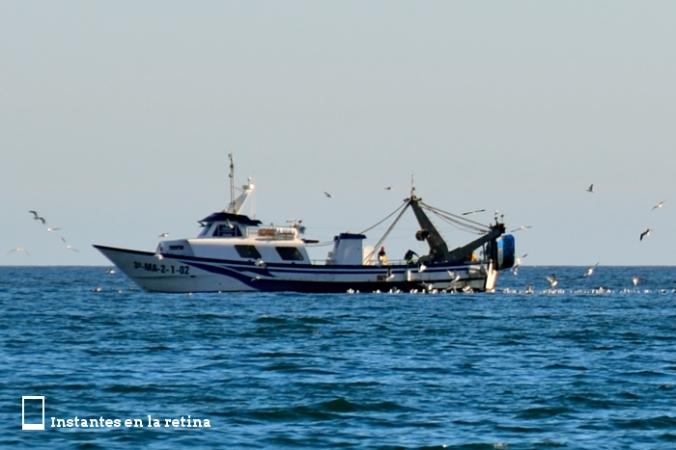 DSC_0925 barco gaviotas 2