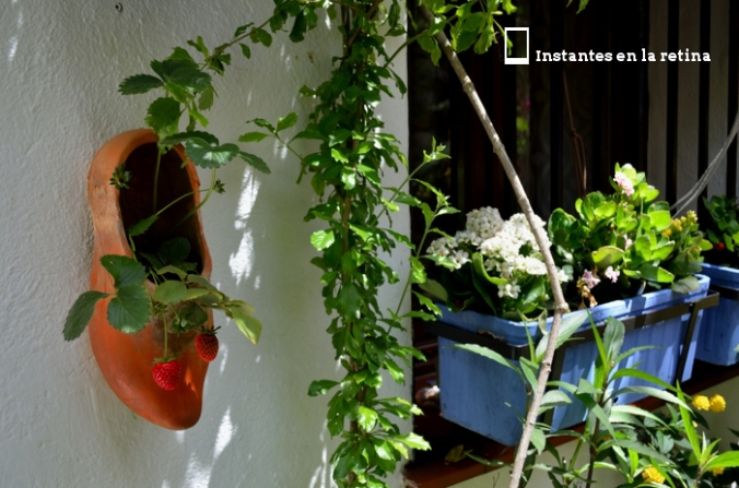 DSC_1662 zapatitos fresas patio