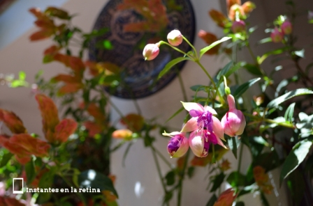 Flores de patios en Córdoba
