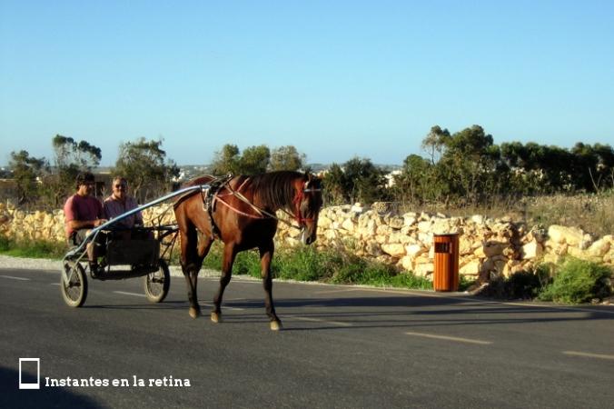 IMG_2414 caballo resize