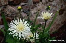 Flores en Ascain