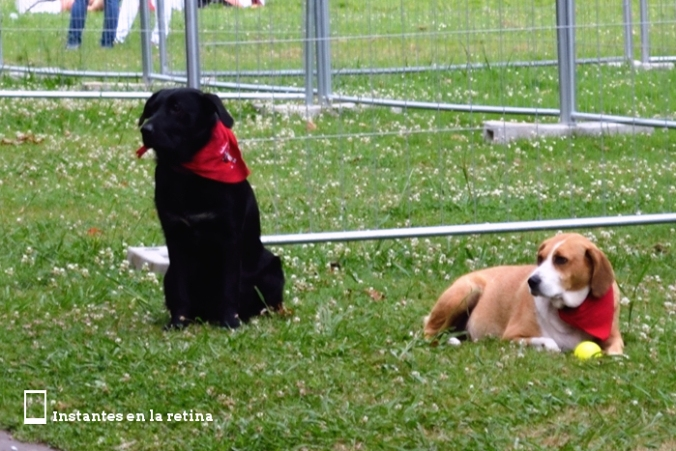 DSC_3274 perros con pañoleta roja