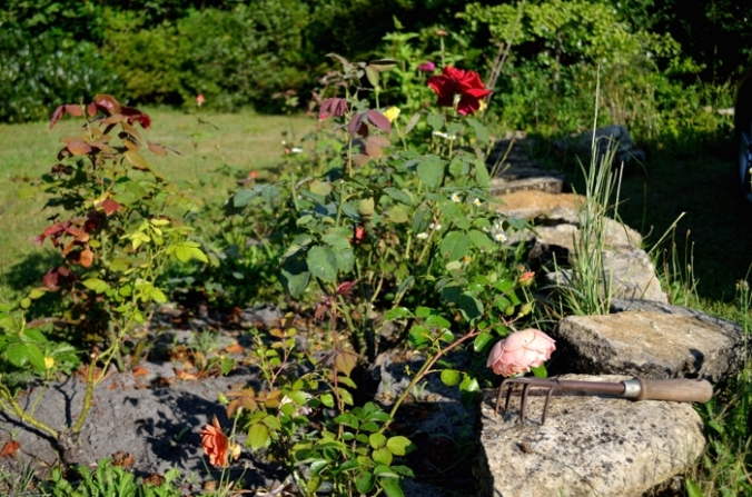 DSC_0053 jardín Danielle
