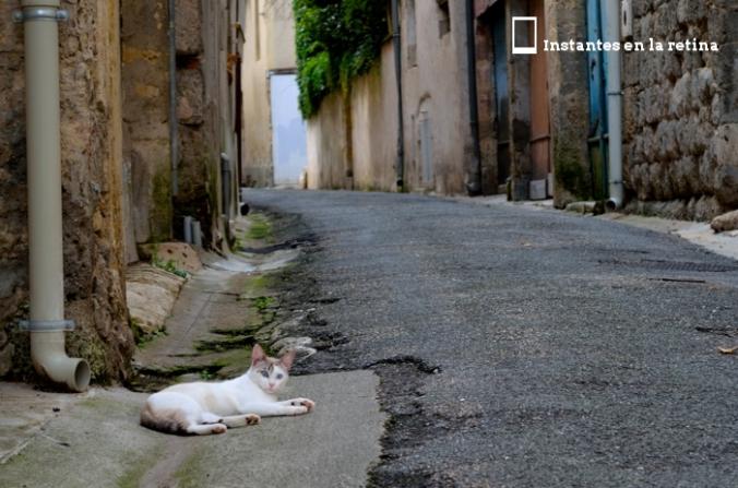 DSC_0798 gato callejero de nérac