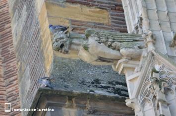 Gárgola. Cathédrale St- Etienne